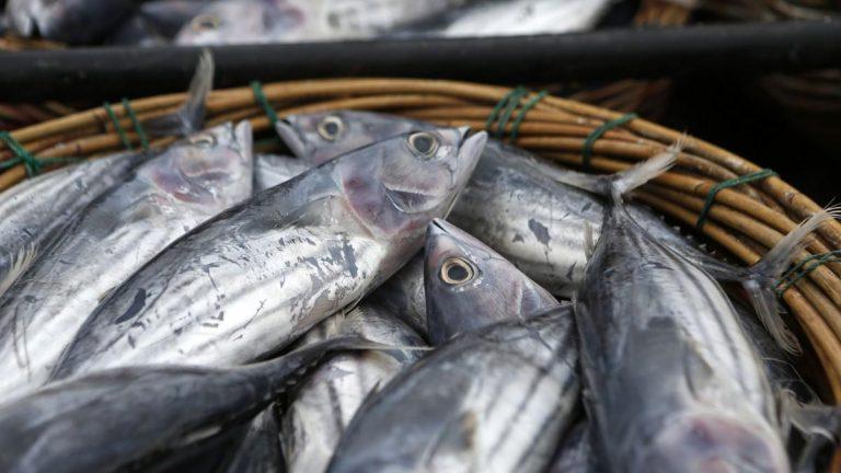 Comer Pescado En Melilla