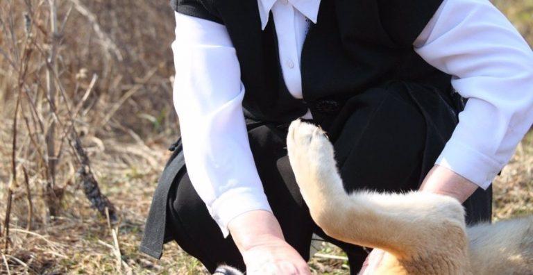 Cuidar Perros Melilla