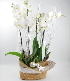 Flores Melilla