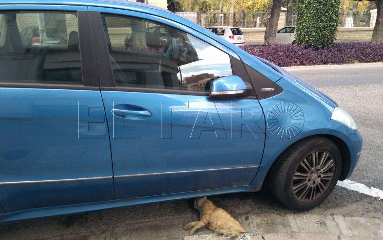 Gatos Y Perros En Adopcion En Melilla