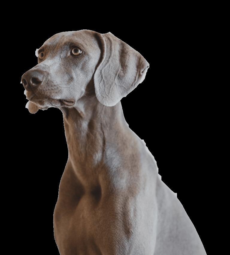 Peluqueria Canina Melilla
