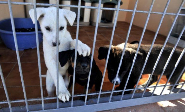Protectora De Animales Melilla