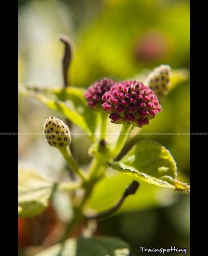 Talleres Flores Melilla